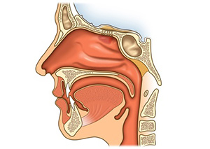 Die Mundhöhle ist für den HNO-Arzt gut einsehbar