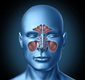 Der HNO-Arzt bezeichnet die Ausbuchtungen im Naseninnern als Nasennebenhöhlen